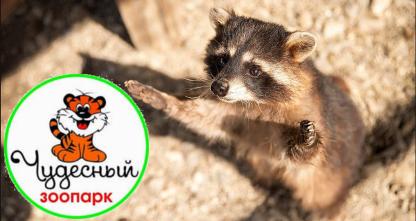 50% скидка на посещение зоопарка в Уссурийске! В парке представлены — уссурийские тигры, рыси, пумы, сервалы, лев, олени, дикобраз и другие!