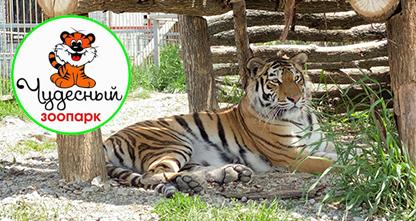 50% скидка на посещение зоопарка! В парке представлены — уссурийские тигры, рыси, пумы, сервалы, лев, олени, дикобраз и другие!