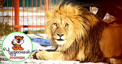 50% скидка на посещение зоопарка всего за 50 рублей! Удивительный мир животных!